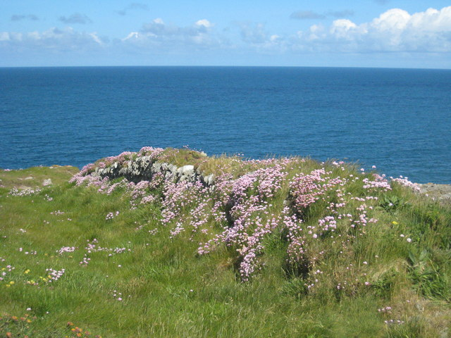 Cornish hedge on Pentire Point West