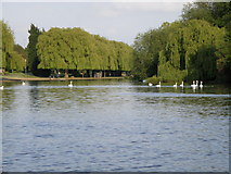 TL1998 : Downstream on the River Nene by Michael Trolove