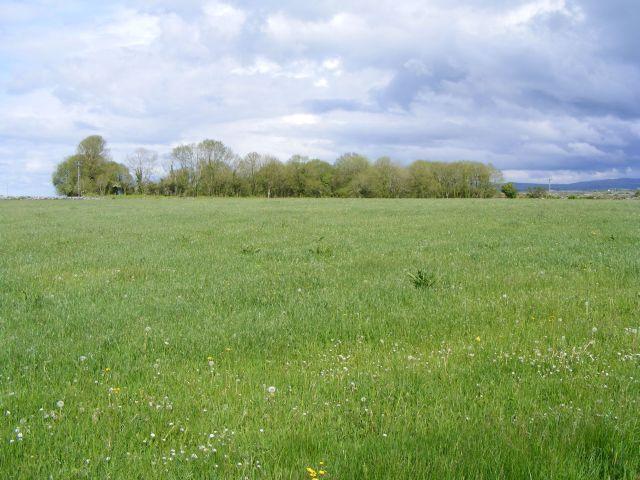Silage or hay field - Killeenavarra Townland