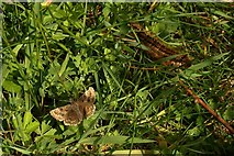 SX9066 : Insect life near Nuthatch Drive, Torquay by Derek Harper