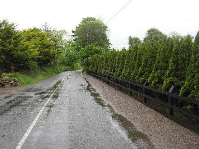 Wet road, neat hedge at Douglas