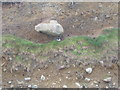 SH5910 : Oystercatcher and boulder, Llwyngwril by E Gammie