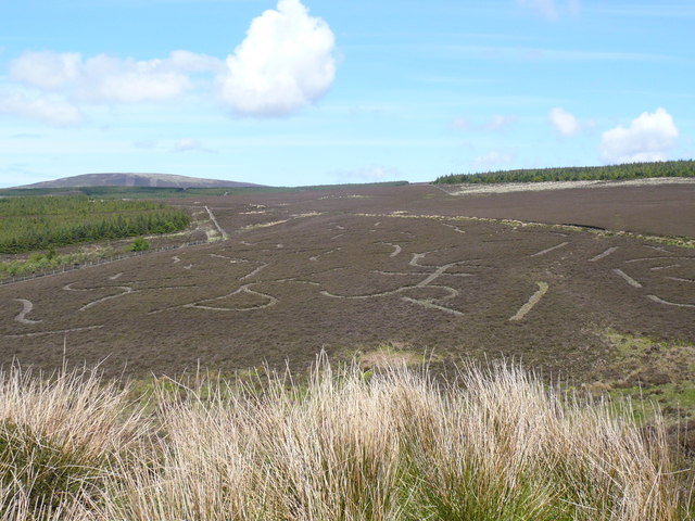 Cut patterns in the heather moorland at Dreembeary