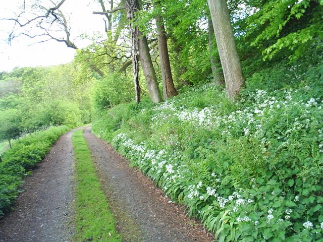 Bridleway/farm track near Burnfoot in the South Tyne Valley