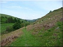 SJ1532 : Path through Nant y Glog near Llanarmon DC by Jeremy Bolwell