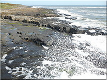 NU2520 : Looking north over the harbour wall at Craster by pam fray
