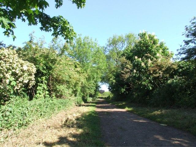 Trent Lane from the riverside