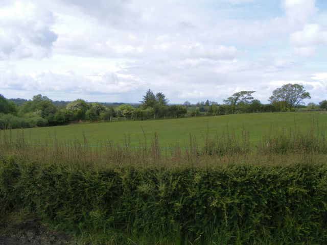 Pasture - Ballynagreeve Townland