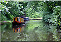 SJ7823 : The Shropshire Union Canal north of Norbury, Staffordshire by Roger  Kidd