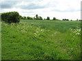 TF7219 : Barley field adjoining footpath by Evelyn Simak