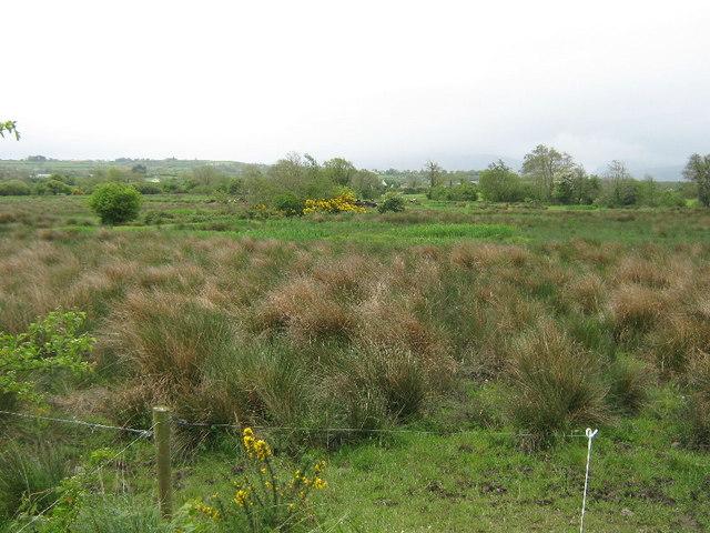 Rough ground at Ballynacarrig