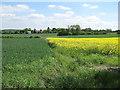 TL6353 : Arable fields by Hugh Venables