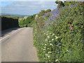 SW4227 : Hedgerow flowers alongside the B3283 by Rod Allday