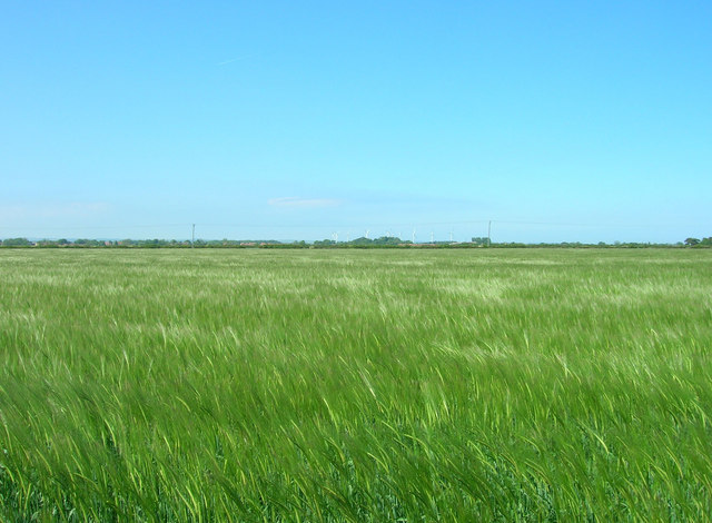 Crop Field North West of Pinderhill Farm