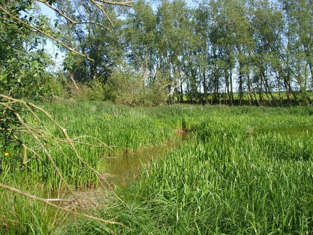 Reed and Yellow Iris beds, Pedlar Wife Hole