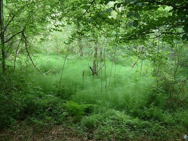 Spring, Widdenton Park Wood