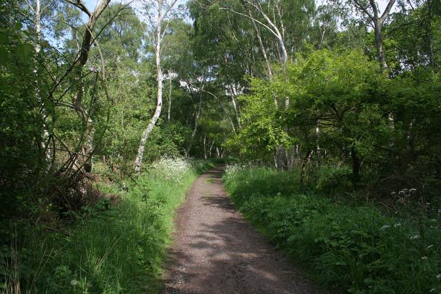 The Robin Hood Way, Sherwood Forest