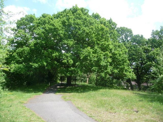 Honor Oak Park: the Oak of Honor