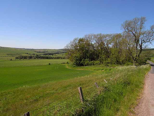 Field and copse near Prendwick