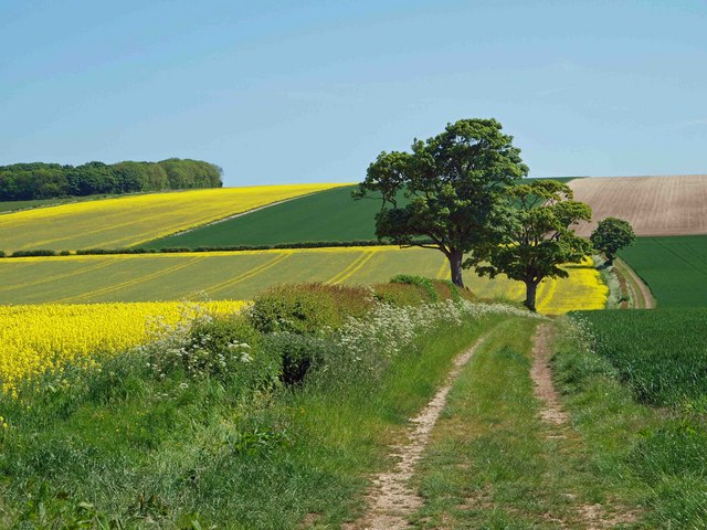 Farm track on the Yorkshire Wolds near Rudston