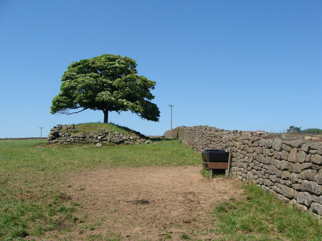 Dry stone wall and island tree