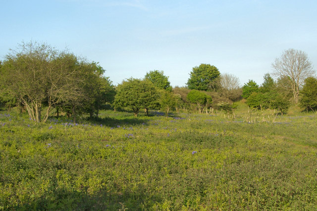 Bushes and trees in the north of Merthyr Mawr Warren (spring view)
