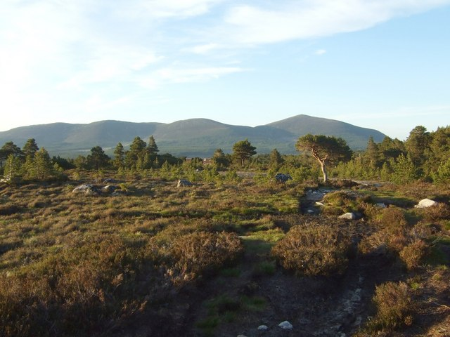 Rothiemurchus forest