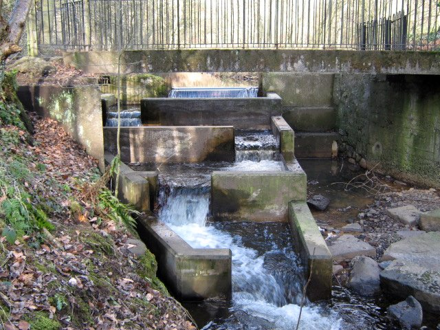 Fish ladder on Lothrie Burn as it enters the River Leven