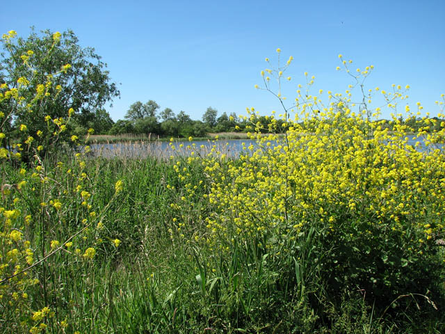Flowering shrubs on the Wherrymans Way