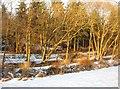 SU6454 : Winter sunshine by Sandy B