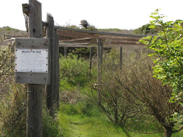 Heligoland Trap, Spurn Point