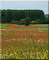 TM0361 : Meadow towards Haughley by Andrew Hill