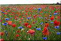 TM0361 : Meadow full of  poppies and cornflowers by Andrew Hill