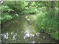 TQ7240 : River Teise by David Anstiss