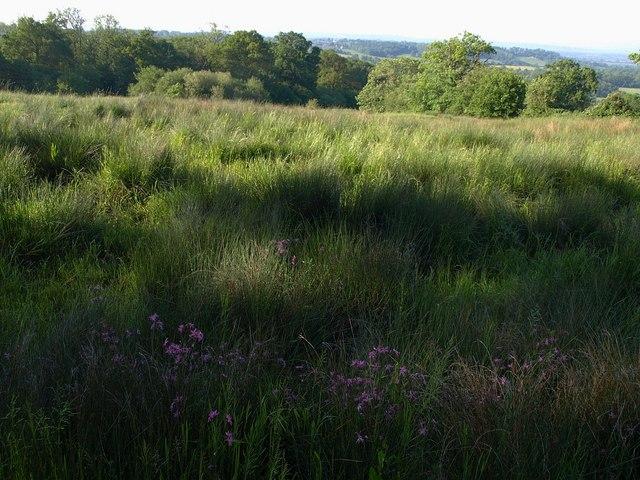 Meadow below Foxbury Wood