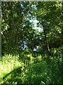 ST9467 : Footpath by Foxbury Wood by Derek Harper