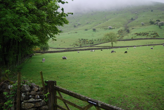 Sheep grazing in Wasdale