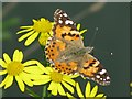 TR3864 : Painted Lady butterfly 'Cynthia cardui' at Ramsgate harbour by Nick Smith