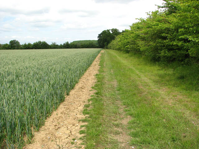 Track to Hales Wood