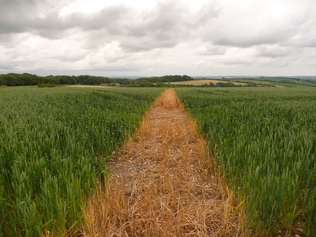 Cerne Abbas: path through field at St. Catherine's Hill