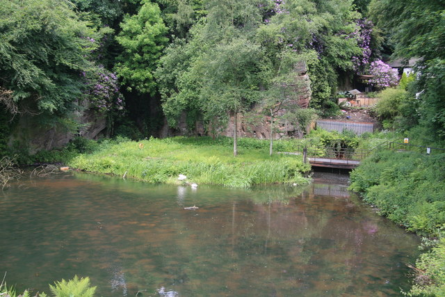 Worsley Delph with nesting swans