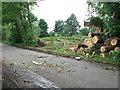 TF9802 : Tree-felling beside Woodrising Road by Evelyn Simak