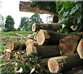 TF9802 : Logs awaiting transport by Evelyn Simak