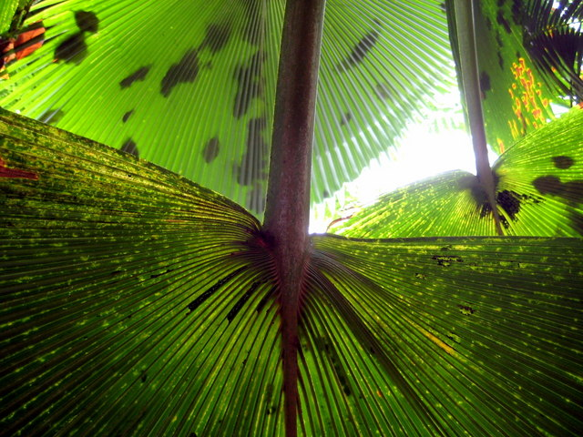 Tropical leaves - Eden Project