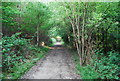 TQ5951 : Bridleway, Dene Park by N Chadwick