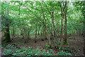 TQ5951 : Coppiced trees, Dene Park by N Chadwick