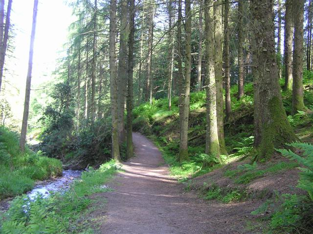 Path, Gortin Glen Forest Park