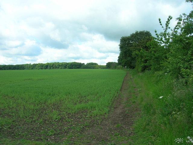 Field Boundary South West of Southburn