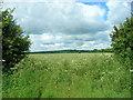 SE9953 : Farmland South East of Southburn by JThomas