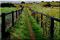 G6633 : Carrowmore Megalithic Cemetery - Path to gravesite by Joseph Mischyshyn